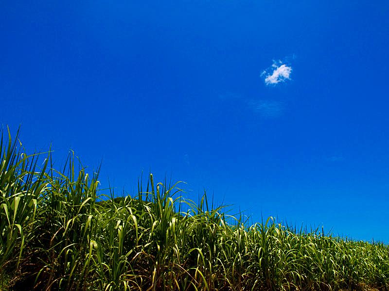 有機農産物の事業展開 助言欲しい【よろず相談カルテファイル0030】